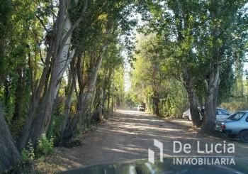 Avelino Maure - - Guaymallen | Mendoza